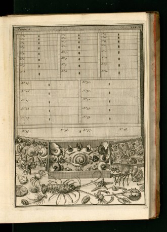 Vincent,_Levinus_(1715)_Wondertooneel_der_natuur_-Tome_2-_0294.jpg